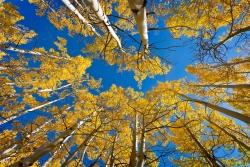 Yellow Trees Blue Skies