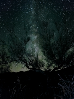 Photograph of milky way stars through desert shrub brush in Box Canyon, California