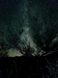 Photograph of milky way stars through desert shrub brush in Box Canyon, California