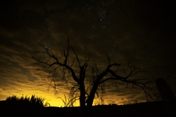 Photograph of the night sky reflecting orange and yellow light from San Diego, California through clouds with dead tree