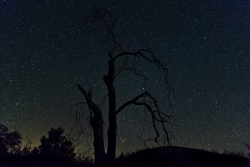 Photograph of the night sky with stars and dead trees near Cleveland National Forest, California