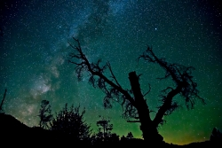 Photograph of Milky Way Stars with eerie tree at Shermans Pass, California