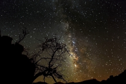 Photograph of Milky Way Stars with dead shrub on a cliff in Valley of the Moon, California across the Night Sky