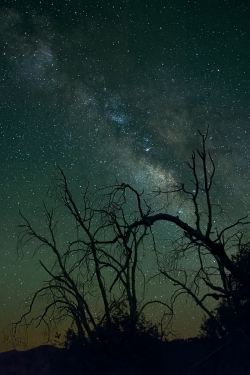 Photograph of Milky Way Stars with dead trees near Cleveland National Forest, California across the Night Sky