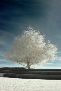 Tree Grass Infrared