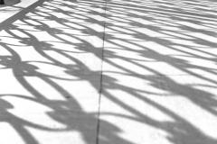 Balboa Shadows